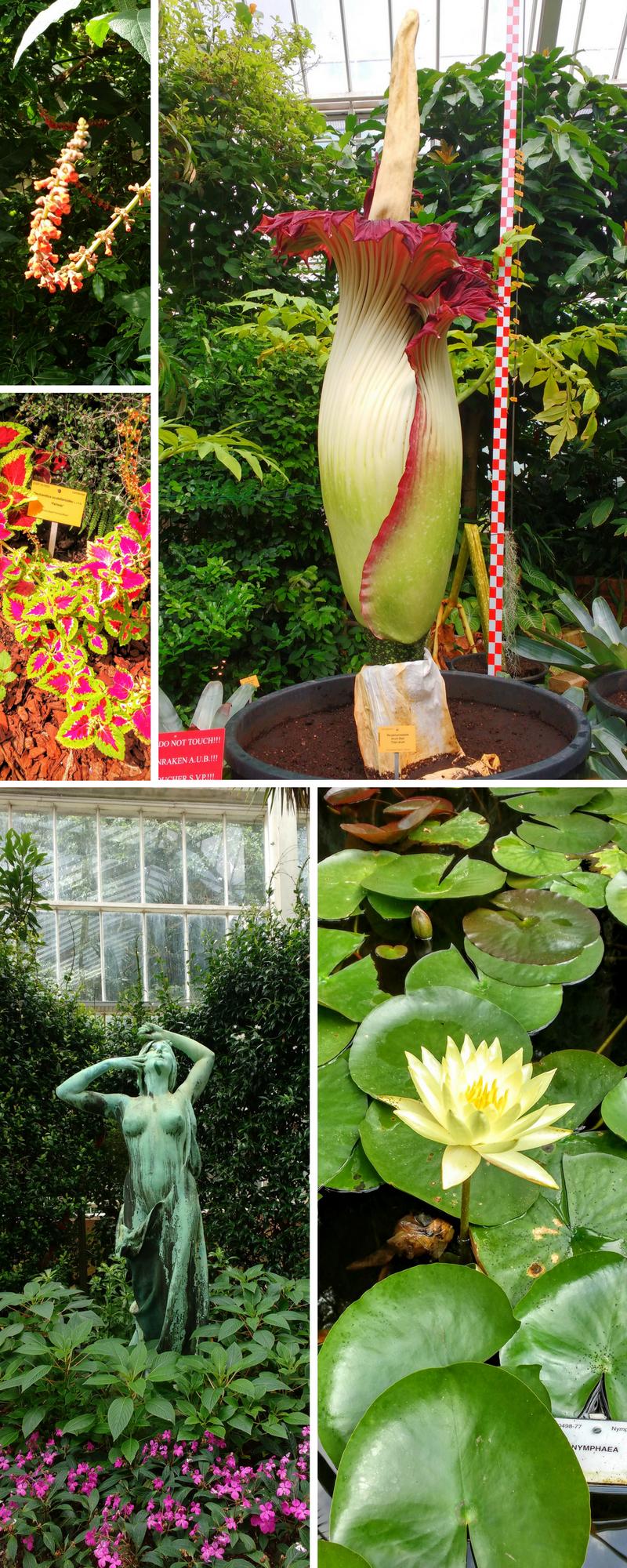매이스에 있는 식물원 - 꽃