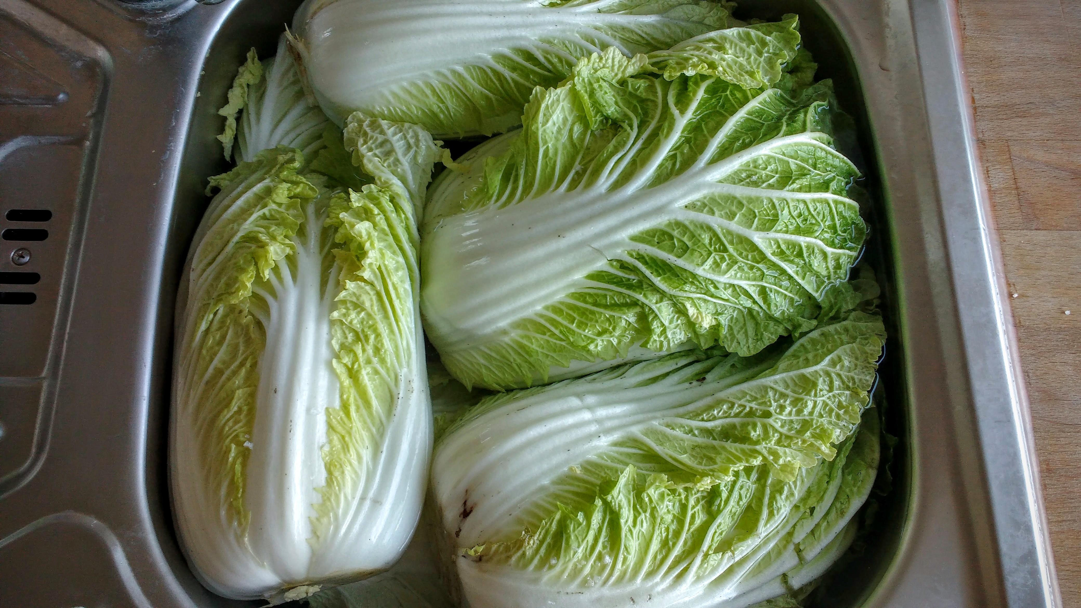 Cabbage Spa
